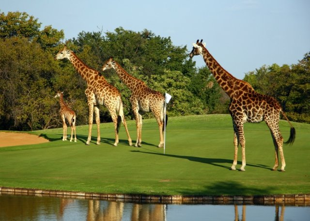 Golf in the Wild