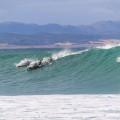dolfyne surfers