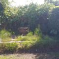 15 Du Plessis MH 6