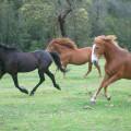 40.  Horses