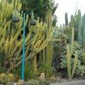 Obesa Cactus & Succulent Garden