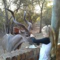 Kudu visiting for a treat