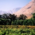 Drakenstein Mountain View