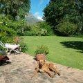20161009_152701Garden suite patio with Rupert