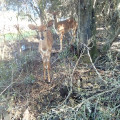 Deer in forest area