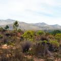 avani_private_nature_reserve_botrivier_accommodation_