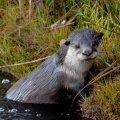 Otterscreek-JohnDonaldson-4802
