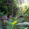 Birdwood Garden