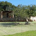 Farmstead-fenced and pet friendly