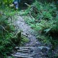 KRM David picnic bridge forest