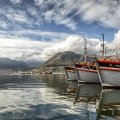 hout bay fishing harbour