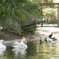 Duck Sanctuary