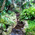 Stream at bottom of garden which attracts small buck and birdlife