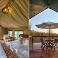 Hoopoe Tent Big