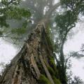 KRM Yellowwood
