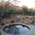 Pool_Sunrise