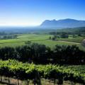 Our Area - Constantia Valley