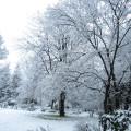 Woodlands Retreat - Fairy Tale Snow Garden