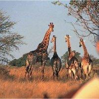 Horizon Horseback Adventures & Safaris