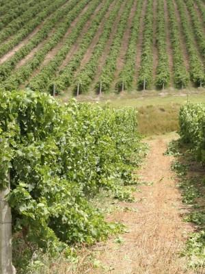 wine walk 2021