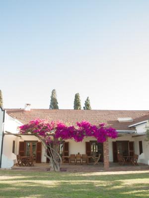 Vesuvio Olive Estates Villa B&B