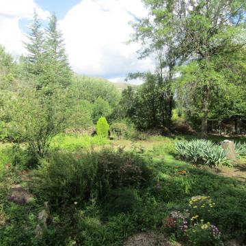 Woodlands Retreat - Lush garden
