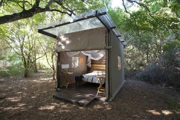 Honey Bee Suite - Perfect for couples looking for a spot of privacy, the exclusive and romantic Honey Bee Suite is situated under a magnificent White Stinkwood tree.