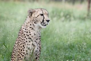 Emdoneni Lodge with Cheetah project